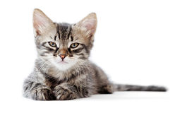Kleines Kätzchen auf weißem Hintergrund lizenzfreie stockfotografie