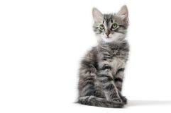 Kleines Kätzchen auf weißem Hintergrund lizenzfreie stockbilder