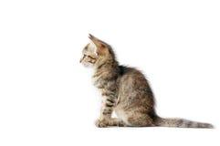 Kleines Kätzchen auf weißem Hintergrund Stockfotografie