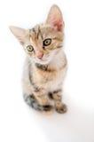 Kleines Kätzchen auf weißem Hintergrund Stockbild
