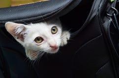 Kleines Kätzchen aus von Kameratasche heraus stockbild