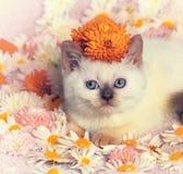 Kleines Kätzchen, das auf den Blumen liegt Stockfotografie