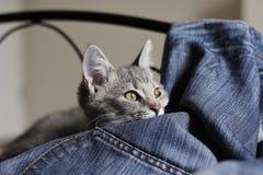 Kleines Kätzchen, das auf Jeans liegt lizenzfreie stockfotos