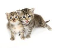 Kleines Kätzchen, das auf weißem Hintergrund spielt lizenzfreies stockfoto