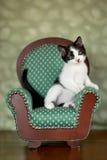 Kleines Kätzchen, das in einem Stuhl sitzt Stockbild
