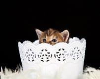 Kleines Kätzchen, das in einem weißen Korb sitzt Stockfotos
