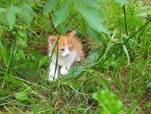 Kleines Kätzchen, das im grünen Gras sich versteckt Stockbild