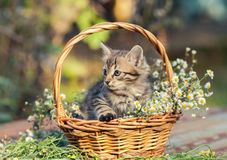 Kleines Kätzchen, das im Korb mit Blumen im Garten sitzt Lizenzfreie Stockfotos