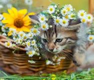 Kleines Kätzchen, das im Korb mit Blumen sitzt Lizenzfreie Stockbilder