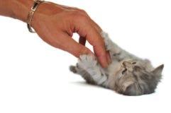 Kleines Kätzchen, das Liebkosung liebt lizenzfreies stockfoto