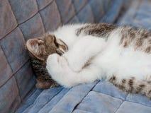 Kleines Kätzchen, das mit den Tatzen bedecken die Mündung auf dem Sofa schläft stockfotografie