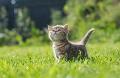Kleines Kätzchen, das oben im grünen Gras schaut lizenzfreie stockfotos