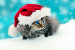 Kleines Kätzchen, das Sankt Hut trägt Lizenzfreies Stockbild