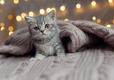 Kleines Kätzchen, das unter einem blan schläft Stockbild