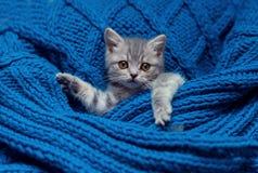Kleines Kätzchen, das unter einem blan schläft Lizenzfreie Stockfotografie