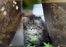 Kleines Kätzchen, das zwischen Blase sitzt Stockbilder