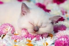 Kleines Kätzchen in den Blumen stockbild