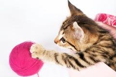 Kleines Kätzchen der getigerten Katze, das in einem Kasten spielt Stockfotos