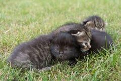 Kleines Kätzchen drei auf dem Gras Lizenzfreie Stockbilder