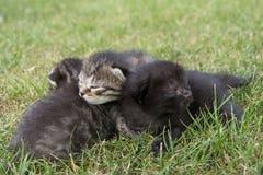 Kleines Kätzchen drei auf dem Gras Stockfoto