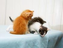 Kleines Kätzchen drei, das unten schaut lizenzfreie stockfotos