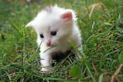 Kleines Kätzchen in einem Gras Stockfotos