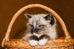 Kleines Kätzchen in einem Korb Stockfotos