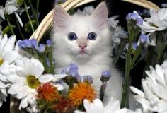 Kleines Kätzchen in einem Korb von Blumen Stockfotografie
