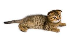 Kleines Kätzchen getrennt auf Weiß Lizenzfreies Stockbild