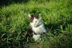 Kleines Kätzchen im Garten stockfotos