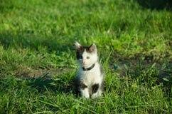 Kleines Kätzchen im Garten lizenzfreie stockfotografie