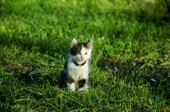 Kleines Kätzchen im Garten lizenzfreie stockbilder