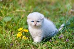 Kleines Kätzchen im Gras Stockfotografie