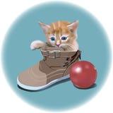 Kleines Kätzchen im Schuh Stockfoto