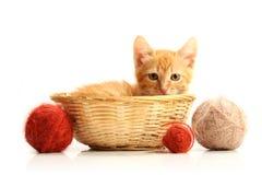 Kleines Kätzchen im Strohkorb lizenzfreie stockbilder