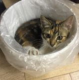 Kleines Kätzchen, legend in einen Behälter Stockfotografie