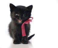 Kleines Kätzchen mit Farbband Lizenzfreies Stockbild