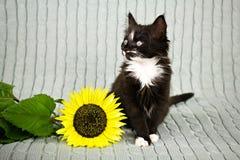 Kleines Kätzchen mit Sonnenblume stockfotos