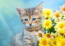 Kleines Kätzchen nahe gelben Blumen Lizenzfreies Stockbild
