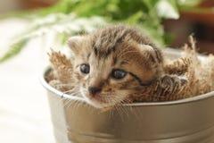 Kleines Kätzchen schläfrig im Eimer Lizenzfreies Stockfoto