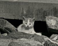 Kleines Kätzchen - Schwarzweiss Stockbild