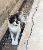 Kleines Kätzchen sitzen im schmutzigen Abfluss Stockbilder