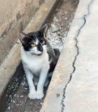Kleines Kätzchen sitzen im schmutzigen Abfluss Stockfotos