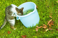 Kleines Kätzchen trinkt Wasser Lizenzfreies Stockfoto