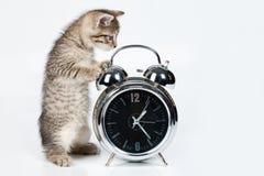 Kleines Kätzchen und Alarmuhr Stockbilder
