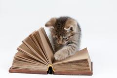 Kleines Kätzchen und Buch Stockfotos