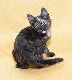 Kleines Kätzchen, welches die Trikolore, seine Schulter umdrehend schaut Stockfoto