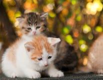 Kleines Kätzchen zwei Lizenzfreie Stockfotos