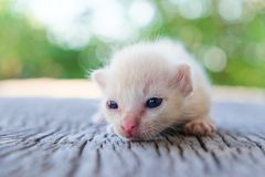 Kleines Kätzchenlügen Stockfoto