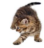 Kleines Kätzchenspielen Getrennt auf weißem Hintergrund Lizenzfreie Stockfotografie